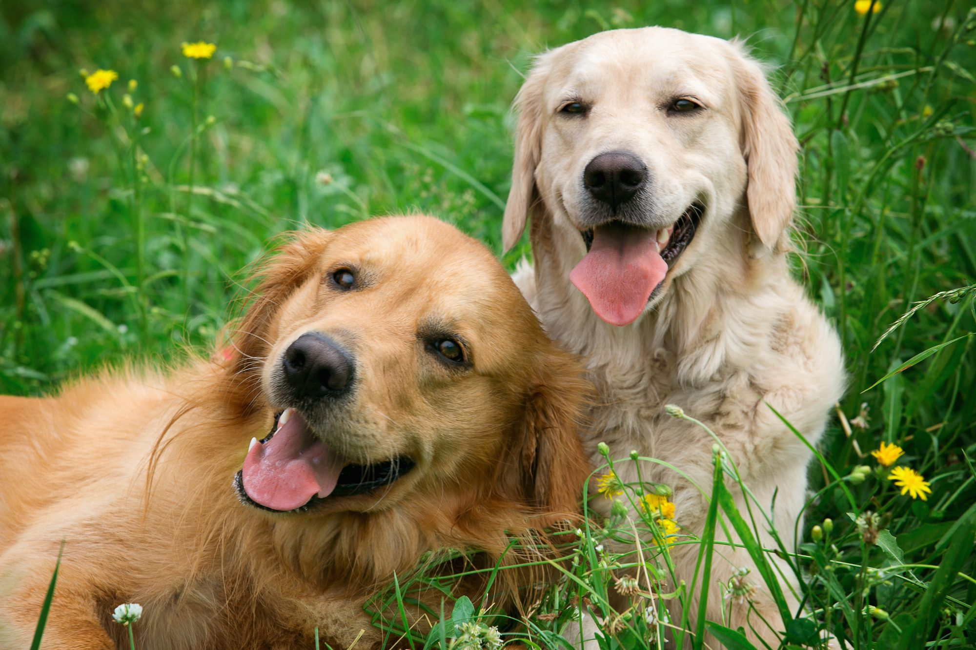 Portrait of two young dogs in grass