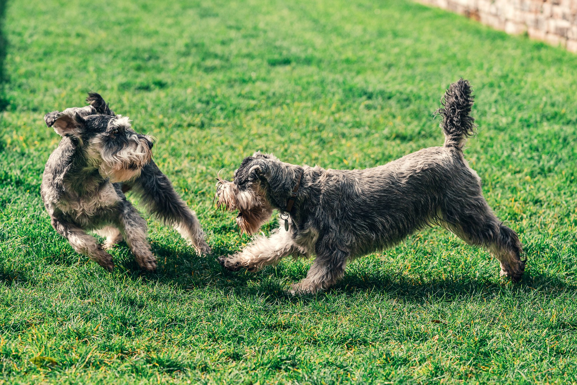 dogs playing in outdoor play area
